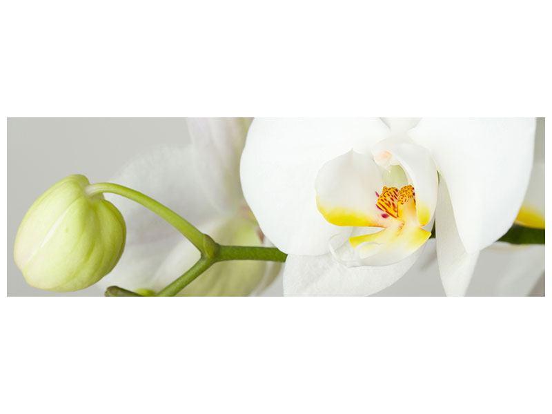 Hartschaumbild Panorama Riesenorchidee