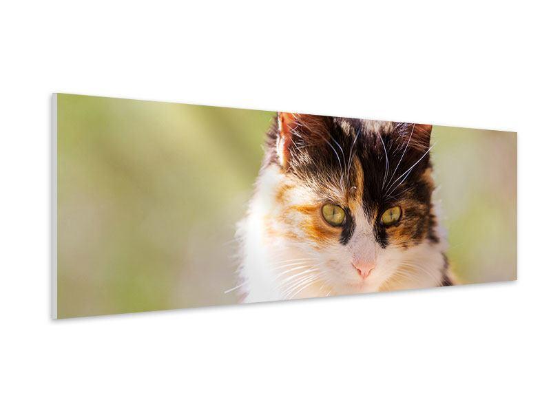 Hartschaumbild Panorama Katzenbesuch