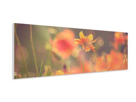 Hartschaumbild Panorama Blütenpracht
