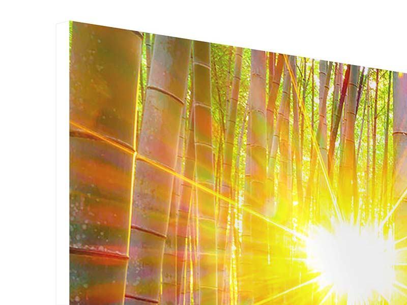 Hartschaumbild Panorama Bambusse