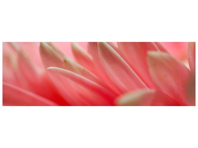 Hartschaumbild Panorama Close Up einer Blüte