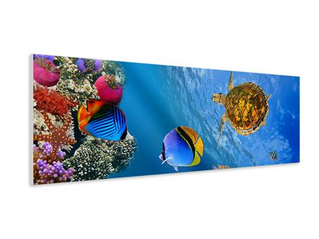 Hartschaumbild Panorama Fisch im Wasser