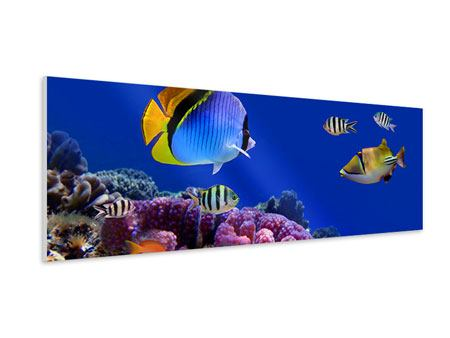 Hartschaumbild Panorama Welt der Fische