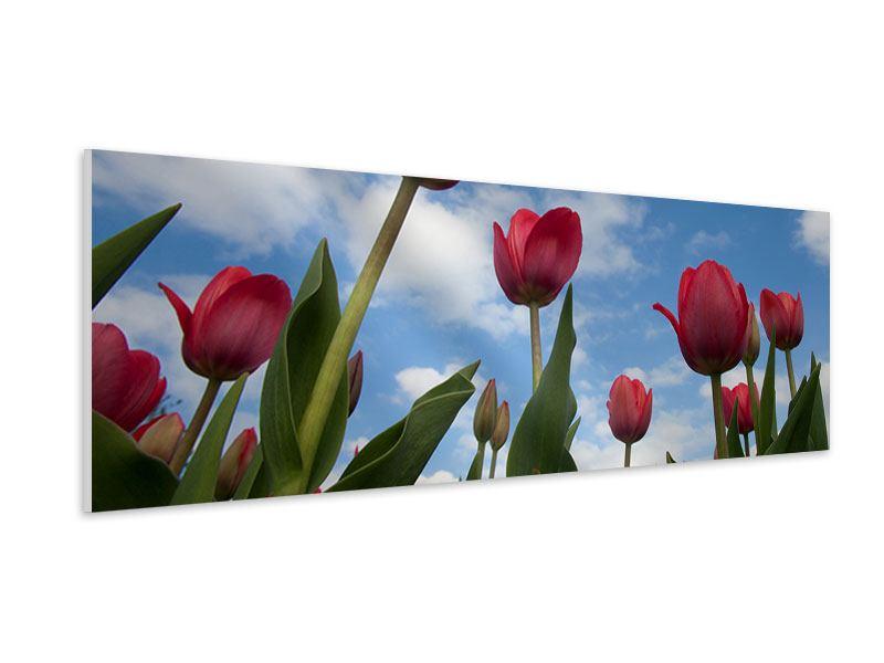 Hartschaumbild Panorama Tulpen im Himmel