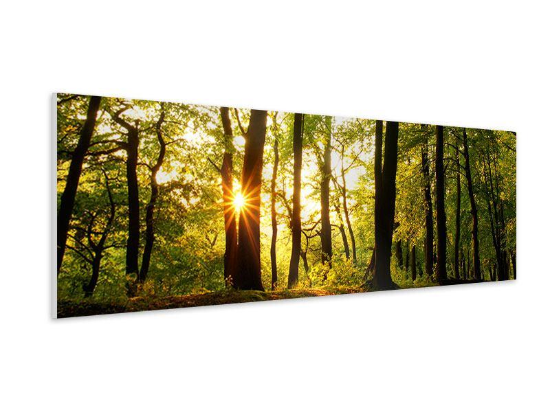 Hartschaumbild Panorama Sonnenuntergang zwischen den Bäumen