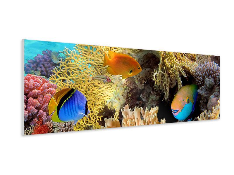 Hartschaumbild Panorama Fischreichtum