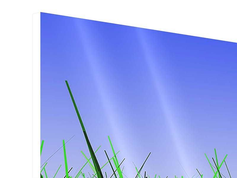 Hartschaumbild Panorama Im Gras