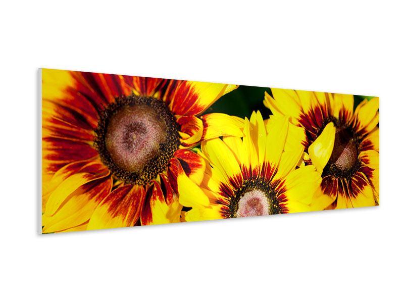 Hartschaumbild Panorama Reife Sonnenblumen