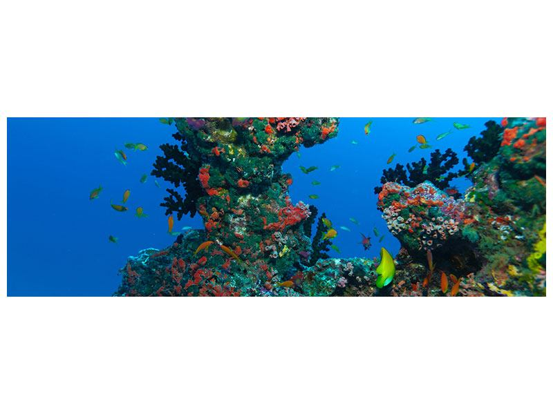 Hartschaumbild Panorama Die Welt der Fische