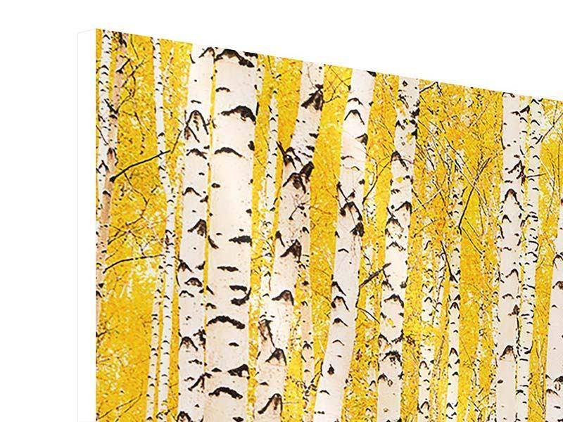 Hartschaumbild Panorama Der Birkenwald im Herbst