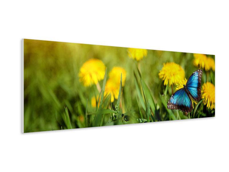 Hartschaumbild Panorama Der Löwenzahn und der Schmetterling
