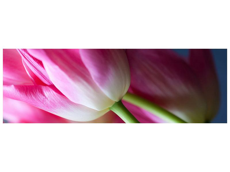 Hartschaumbild Panorama Makro Tulpen