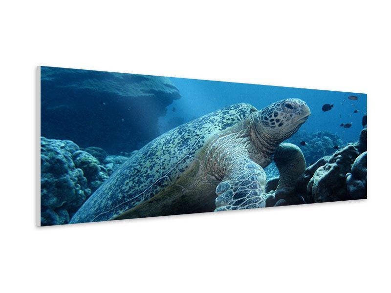 Hartschaumbild Panorama Die Meeresschildkröte
