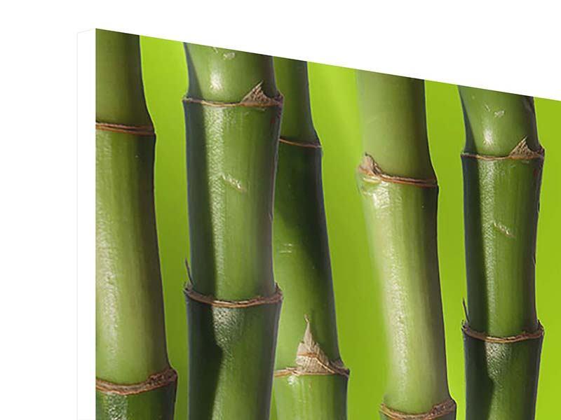 Hartschaumbild Panorama Der Bambus