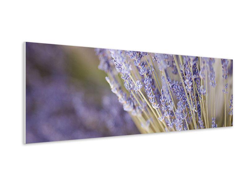 Hartschaumbild Panorama Lavendel XXL