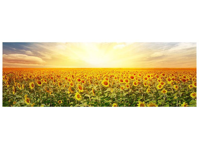 Hartschaumbild Panorama Ein Feld voller Sonnenblumen