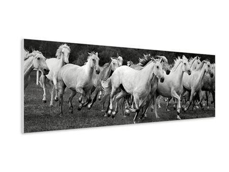 Hartschaumbild Panorama Die Mustang Herde