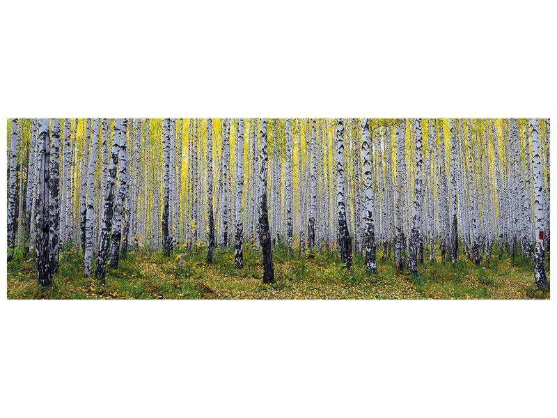 Hartschaumbild Panorama Herbstlicher Birkenwald