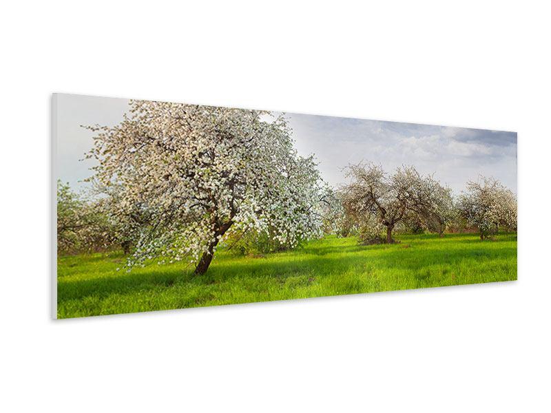 Hartschaumbild Panorama Apfelbaum-Garten