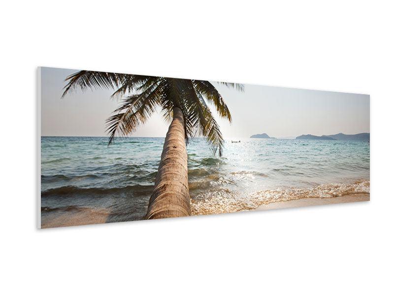 Hartschaumbild Panorama Palme