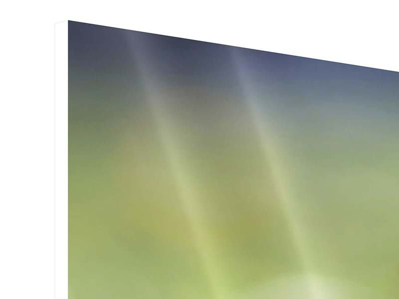 Hartschaumbild Panorama Die Blütenknospe