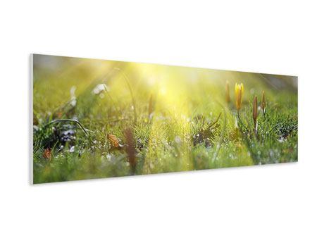 Hartschaumbild Panorama Blumige Wiese