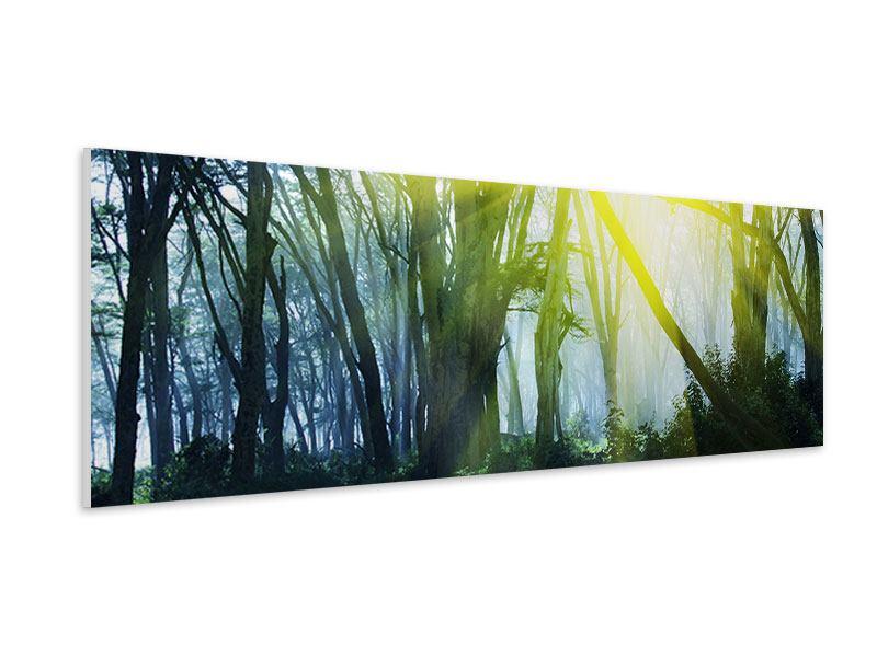 Hartschaumbild Panorama Sonnenstrahlen im Wald