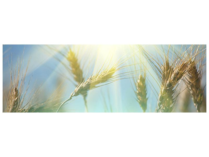 Hartschaumbild Panorama König des Getreides
