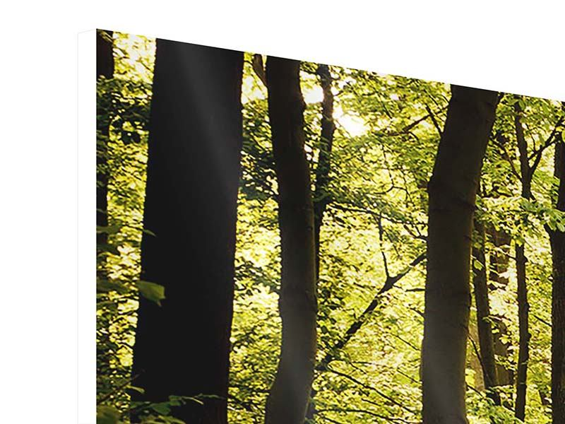 Hartschaumbild Panorama Sonnenaufgang im Wald