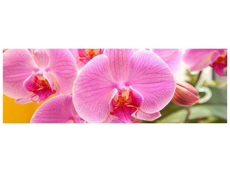 Hartschaumbild Panorama Königliche Orchideen