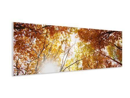 Hartschaumbild Panorama Herbstbäume