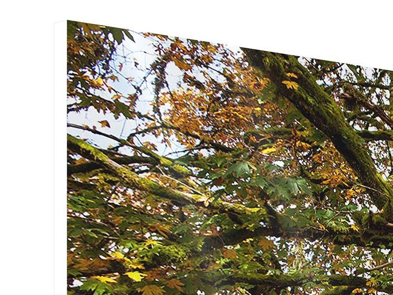 Hartschaumbild Panorama Mein Lieblingsbaum