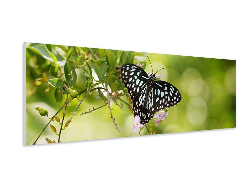 Hartschaumbild Panorama Papilio Schmetterling XXL