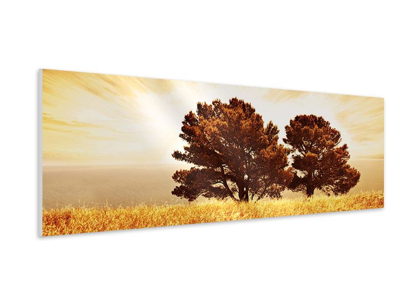 Hartschaumbild Panorama Bäume im Lichtspektakel