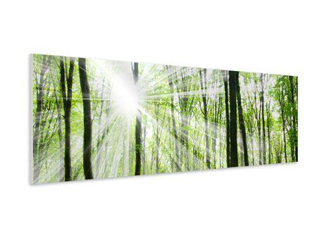 Hartschaumbild Panorama Magisches Licht in den Bäumen