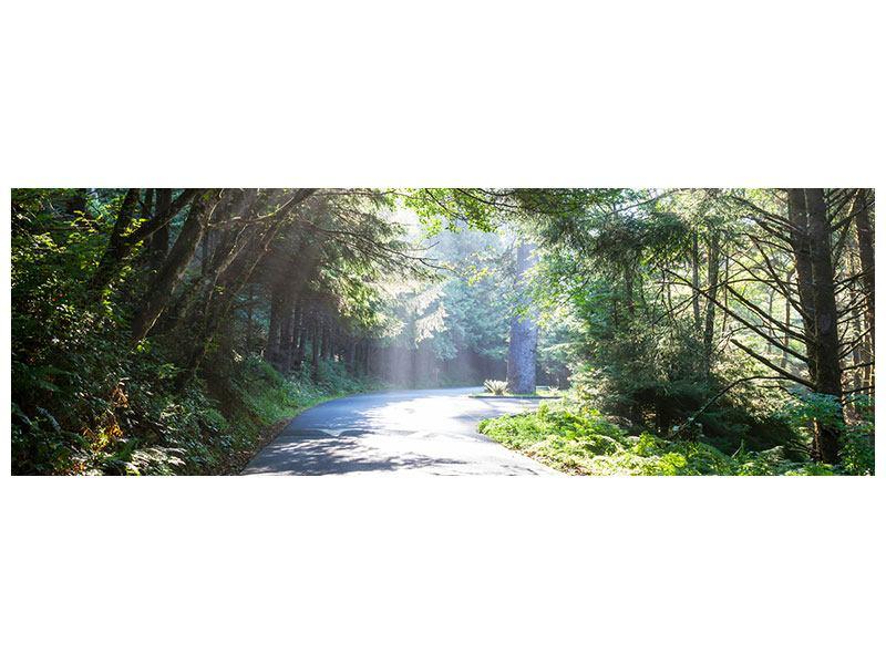 Hartschaumbild Panorama Sonniger Waldweg