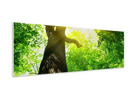 Hartschaumbild Panorama Baum
