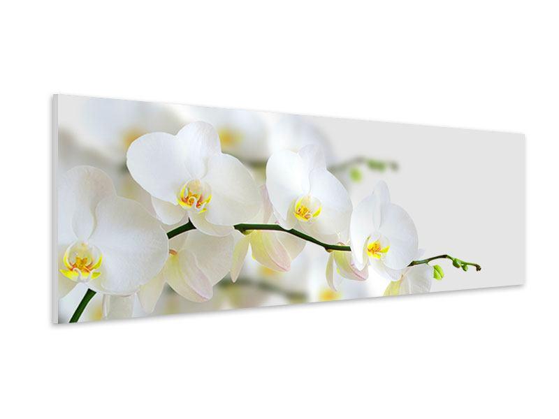 Hartschaumbild Panorama Weisse Orchideen
