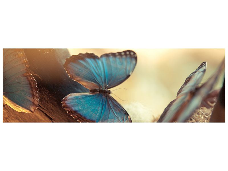 Hartschaumbild Panorama Schmetterlinge