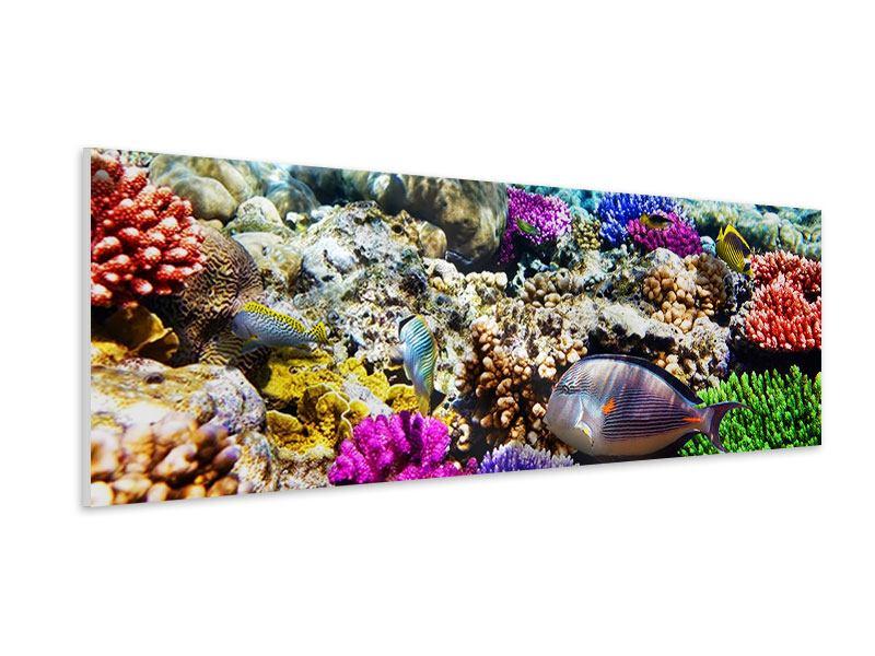Hartschaumbild Panorama Fischaquarium