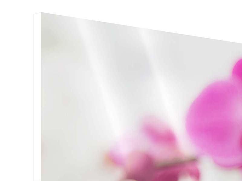 Hartschaumbild Panorama Das Symbol der Orchidee
