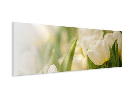 Hartschaumbild Panorama Tulpenperspektive