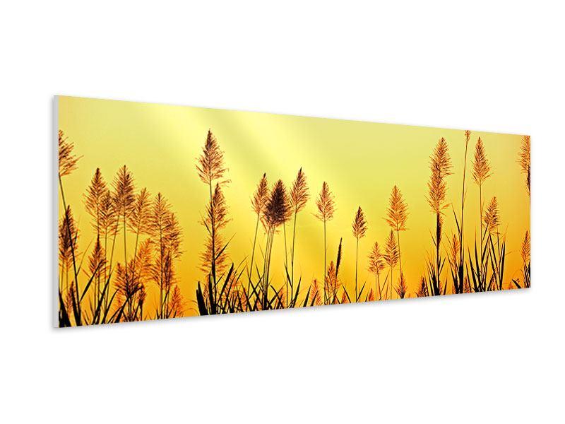 Hartschaumbild Panorama Die Blumen des Feldes