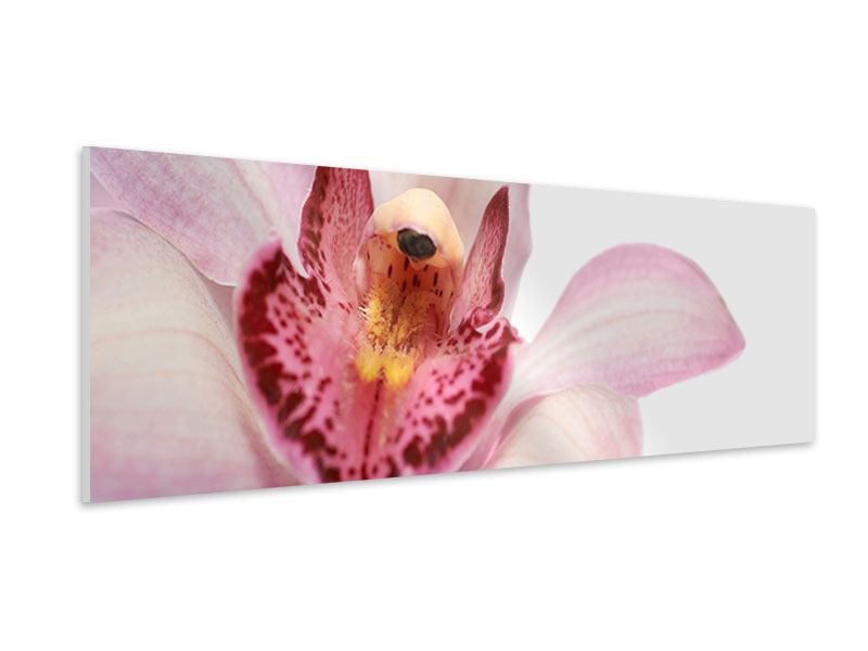 Hartschaumbild Panorama Orchideenblüte XXL