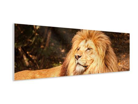 Hartschaumbild Panorama Löwe
