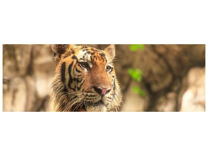Hartschaumbild Panorama Tiger