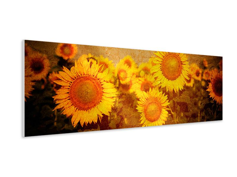 Hartschaumbild Panorama Retro-Sonnenblumen