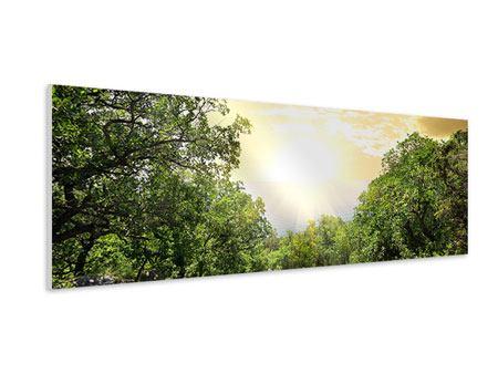 Hartschaumbild Panorama Am Ende des Waldes