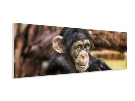 Hartschaumbild Panorama Der Schimpanse