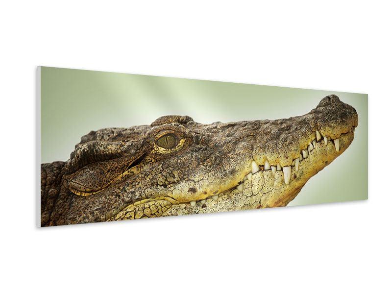 Hartschaumbild Panorama Close Up Alligator
